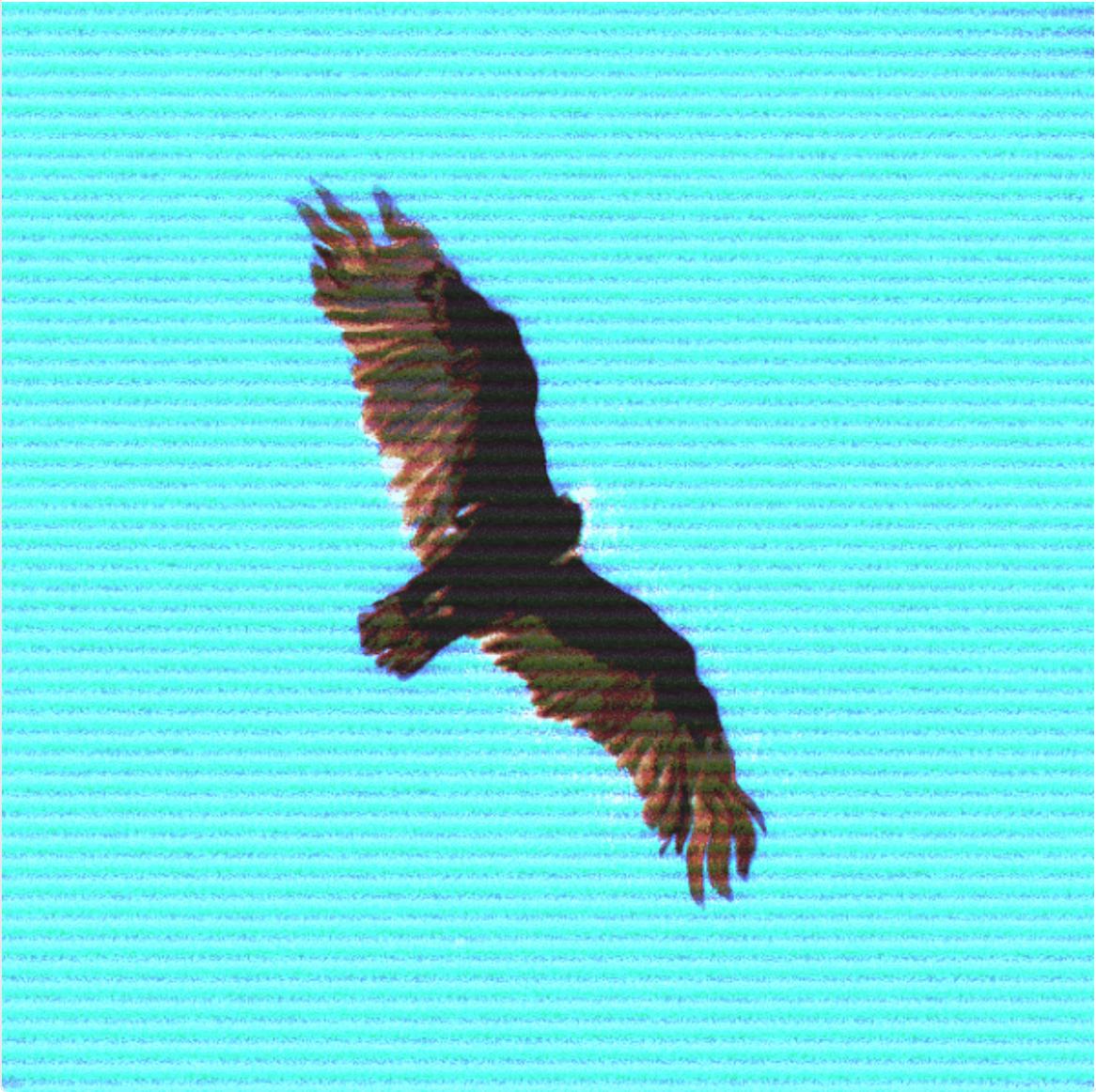 Free as a Eagle